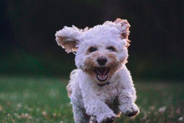 hund och trygghet